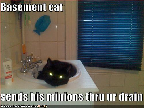 basement-cat-minions-drain.jpg