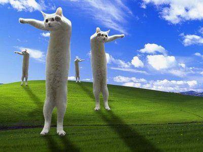 long_cat_009.jpg