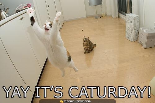 yay-its-caturday.jpg