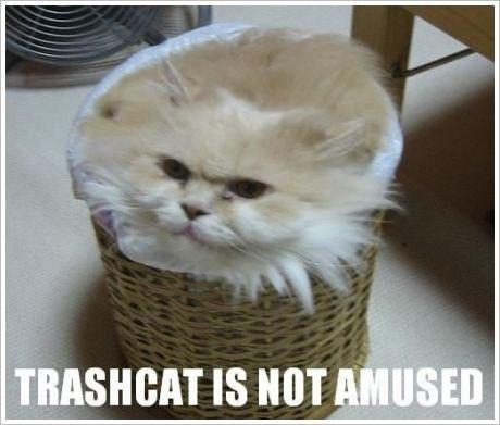 q-lolcats-galloping-galloway-private-polling-trashcat.jpg