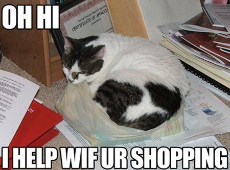 windowslivewriterwhatarelolcats-7e38lolcats-1.jpg