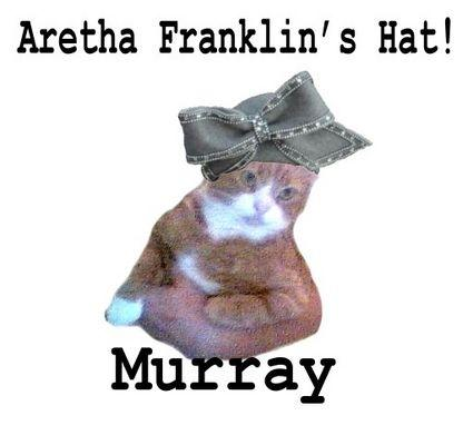 murray-the-cat-11459-1232559977-0.jpg