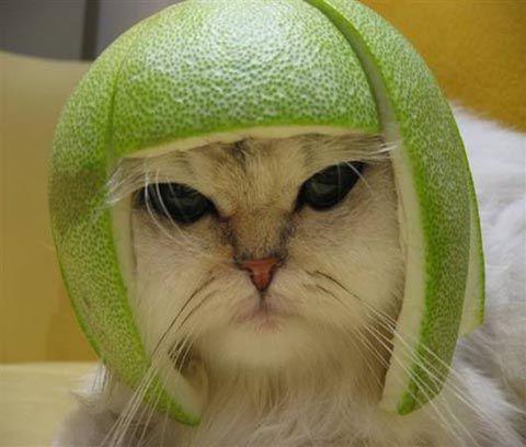lime-cat.jpg
