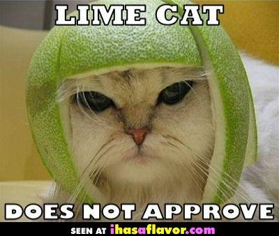 lime-cat-does-not-approve.jpg