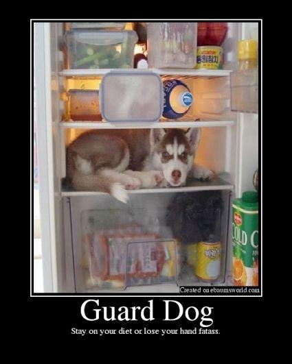 dietdog.jpg