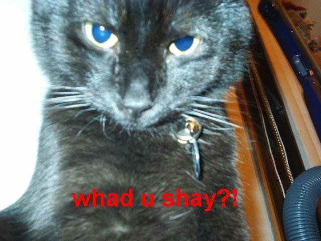 seehere.blogspot.com_20cats_20_76_.jpg