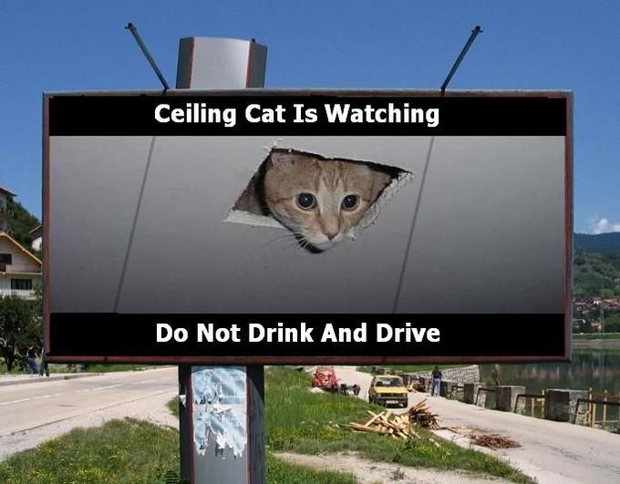ceiling_cat_is_watching____by_hichigo666.jpg