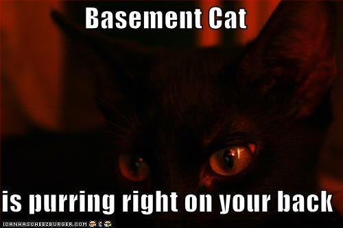 Basement_Cat_by_Frichan.jpg