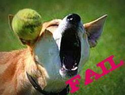 Doggy_FAIL_by_bkdragonrider.jpg
