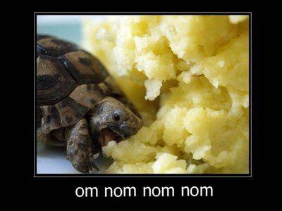 Turtle_Om_Nom_Nom.jpg