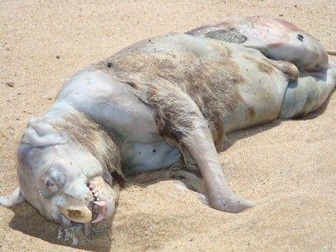 montauk-monster.jpg