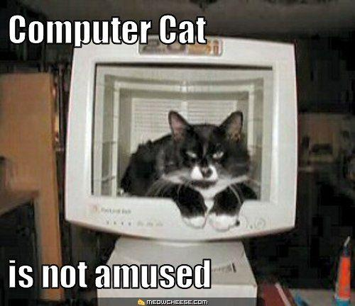 computer-cat-is-not-amused.jpg