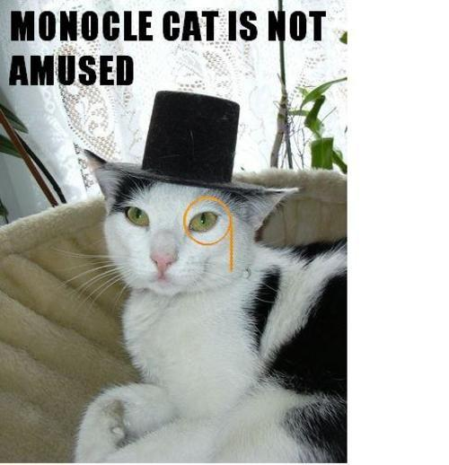monocle-cat-not-amused--large-msg-119697246048.jpg