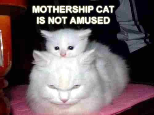 mothershipcat.b_0.jpg