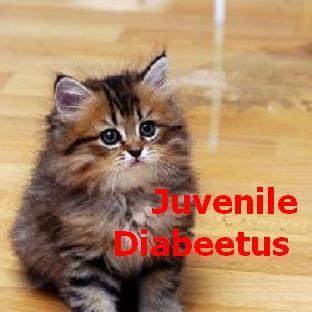 juvenile-diabeetus.jpg