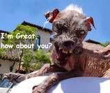 th_Uglydogmessage20110724-22047-y18x8f.jpg