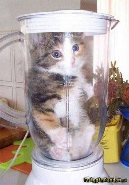 kitten-will-it-blend.jpg