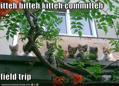funny-pictures-the-itty-bitty-kitty-committee-go-on-a-field-trip.jpg