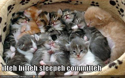 funny-pictures-itty-bitty-sleepy-committee.jpg