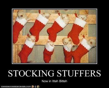 funny-pictures-kittens-are-stocking-stuffers.jpg