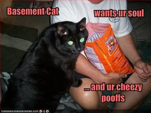 funny-pictures-basement-cat-wants-your-soul-and-your-cheese-snacks.jpg
