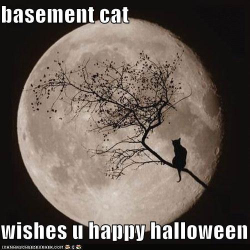funny-pictures-basement-cat-wishes-you-a-happy-halloween.jpg