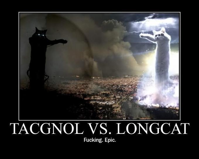 LongCatShowDown.jpg