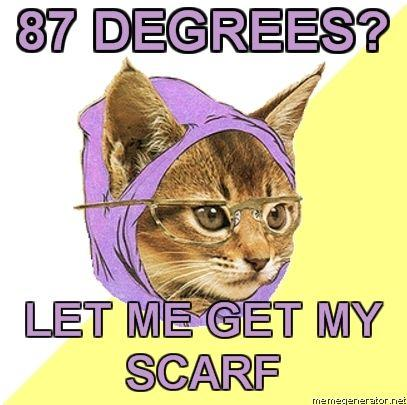 tumblr_kxhvcahrhe1qzh5gno1_500 hipster kitty know your meme