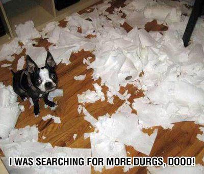 funny-crazy-dog.jpg