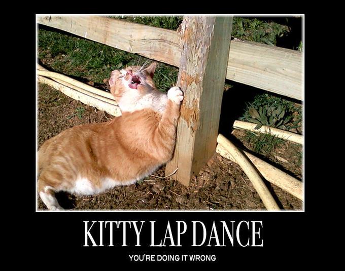 KittyLapDance.jpg