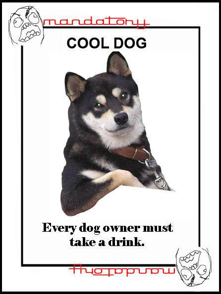 t84833_Cool_Dog.jpg
