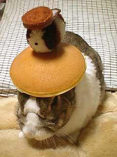 bunny_bonanza_4.jpg