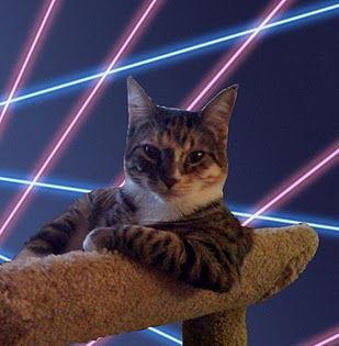 cool_cat.jpg