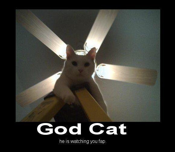 633522848892541953-godcat.jpg