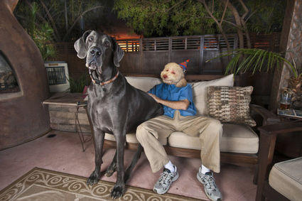 tallest-dog-with-the-birthday-dog-3828-1268367293-22.jpg