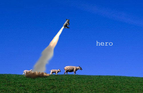 sheep_hero.jpg