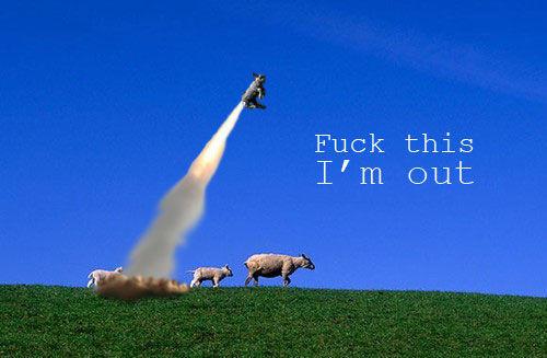 sheep_imout.jpg