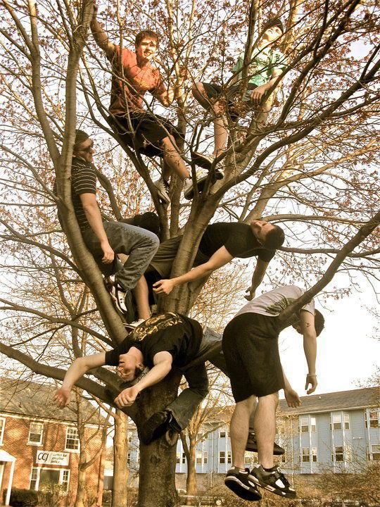 ded_tree.jpg
