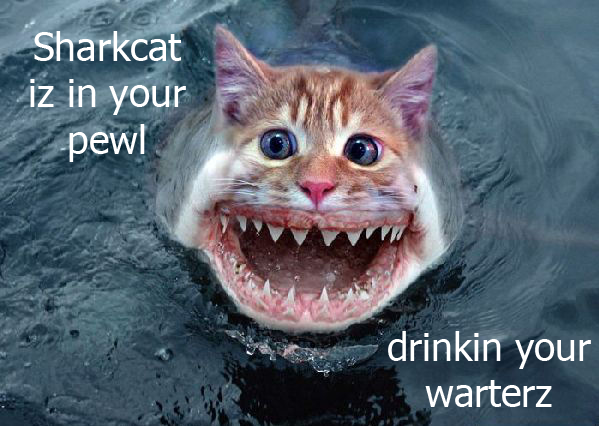 f-shark-cat-3136.png