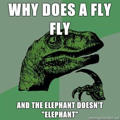 Philosoraptor-Why-does-a-fly-fly-and-the-elephant-doesnt-elephant.jpg