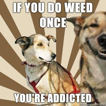 Stoner-dogs-concerned-friend-If-you-do-weed-once-Youre-addicted-.jpg