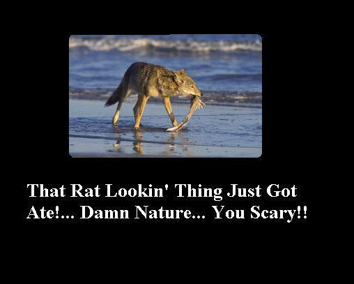 DamN__Nature___You_Scary_by_BlackRoseOfTwilight.jpg