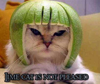 Limecat_not_pleased.jpg