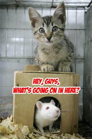Ratcat.jpg