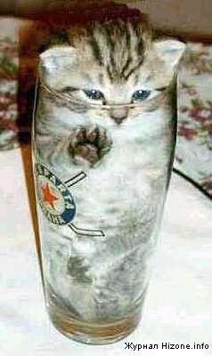 53277-cat_in_a_bottle.jpg