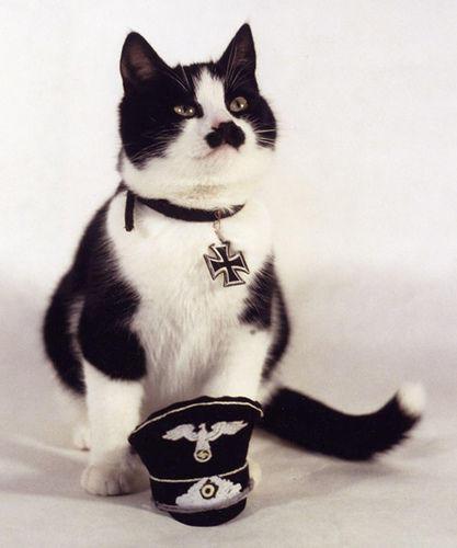 kitler_Cats_that_look_like_Hitler-s417x500-42886-580.jpg