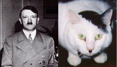 20060619_cats_that_look_like_hitler.jpg