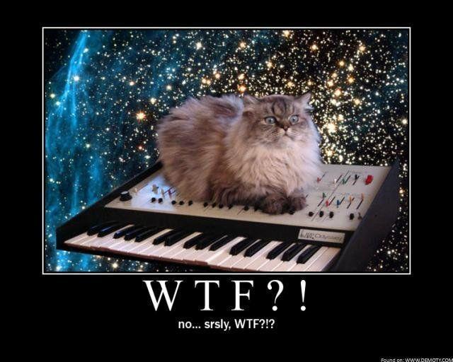 wtf_cat.jpg