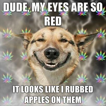 DUDE-my-eyes-are-so-RED-It-looks-like-I-rubbed-apples-on-them.jpg