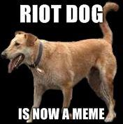 Riot-Dog-riot-dog-is-now-a-meme-20110725-22047-y4boos.jpg